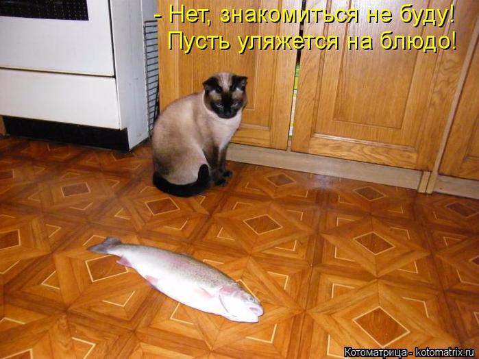 kotomatritsa_24 (700x524, 400Kb)