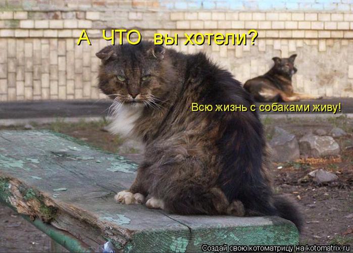 kotomatritsa_b (700x501, 382Kb)