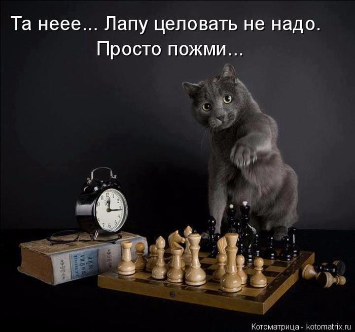 kotomatritsa_Fb (700x653, 243Kb)