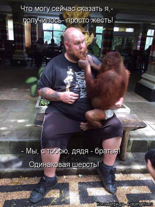 kotomatritsa_Ky (524x700, 410Kb)