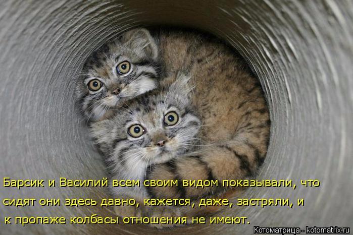 kotomatritsa_-N (700x466, 342Kb)