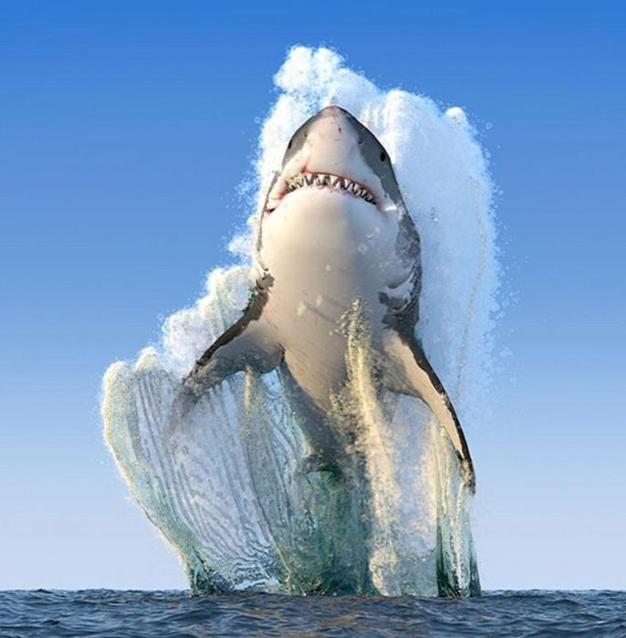 Эффектный снимок от National Geographic!/4596068_pozitiv_4 (686x700, 250Kb)