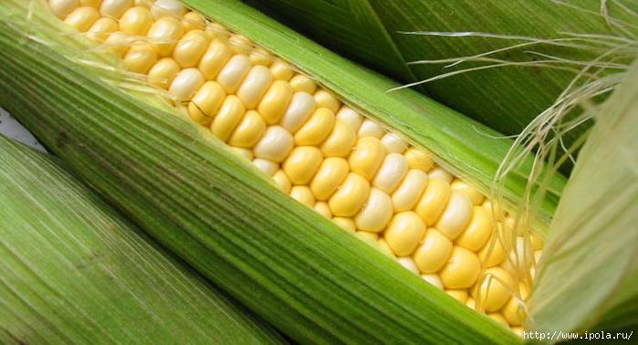 """alt=""""Чем полезна кукуруза для нас?""""/2835299_Chem_polezna_kykyryza_dlya_nas2 (700x378, 168Kb)"""