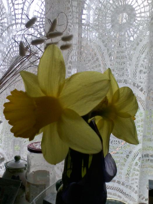 апрель 2017, дача, цветы 004 (525x700, 420Kb)