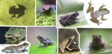 Невероятные факты о животных. Вы будете удивлены!