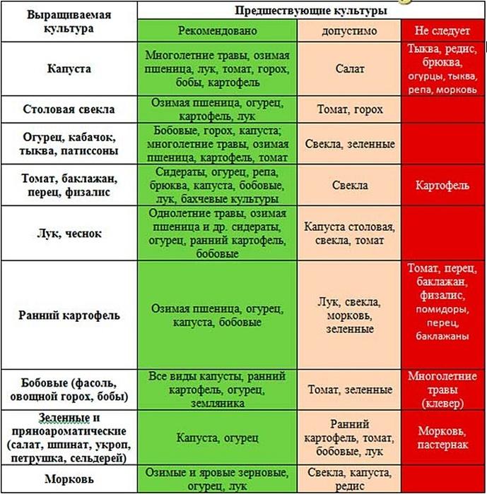 Схема соседства овощей на грядке