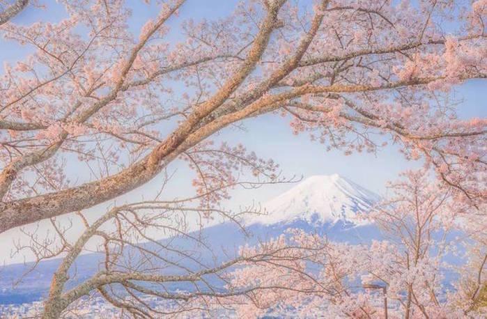 3085196_takashikomatsubarajapanphotography2 (700x458, 67Kb)