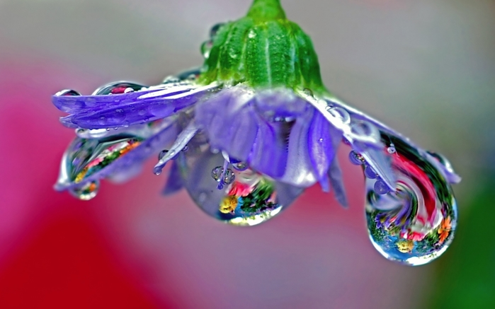 4897960_flower_drops_dew_reflection_stem_29776_2560x1600 (700x437, 160Kb)