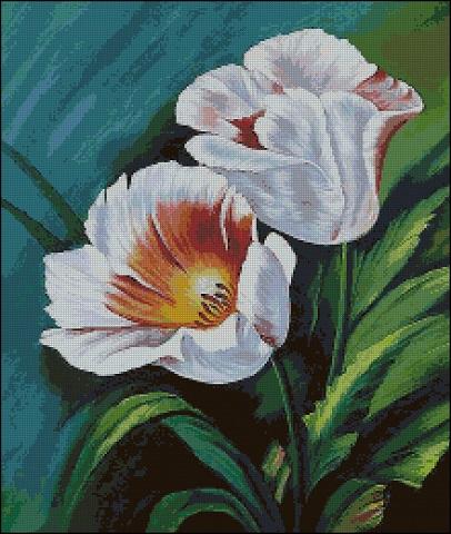Тюльпаны белые_ (406x480, 262Kb)