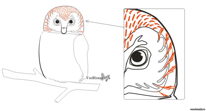 термобелье невозможно как рисовать сову карандашом поэтапно для начинающих эластичность обеспечивает