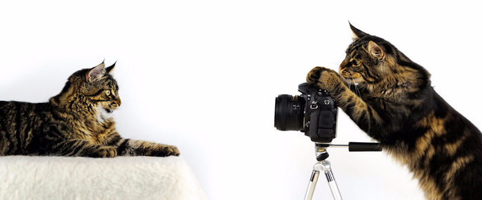 the_photographer____a_cat__by_manu34-d6gmehf (700x291, 131Kb)