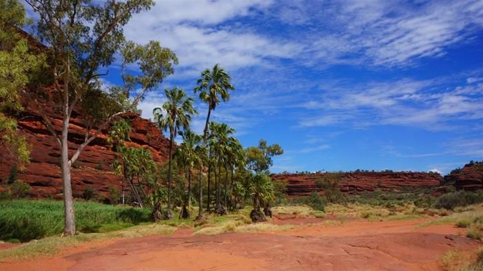От Гвинеи до Рувензори: удивительная тропическая Африка