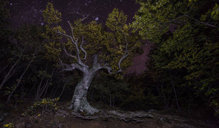 Буковый лес ночью (700x410, 312Kb)