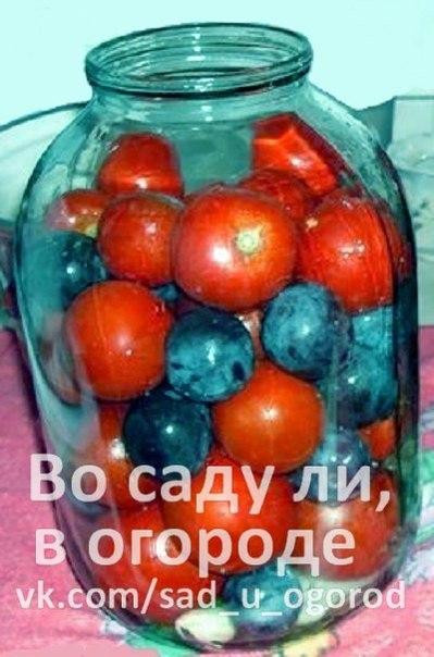 pomidory_s_sinimi_slivami_-_nahodka_zimoy (399x604, 57Kb)