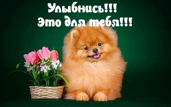 proxy.imgsmail.ru (344x215, 40Kb)