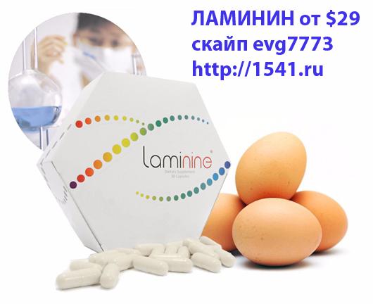 laminine1541777 (530x432, 166Kb)