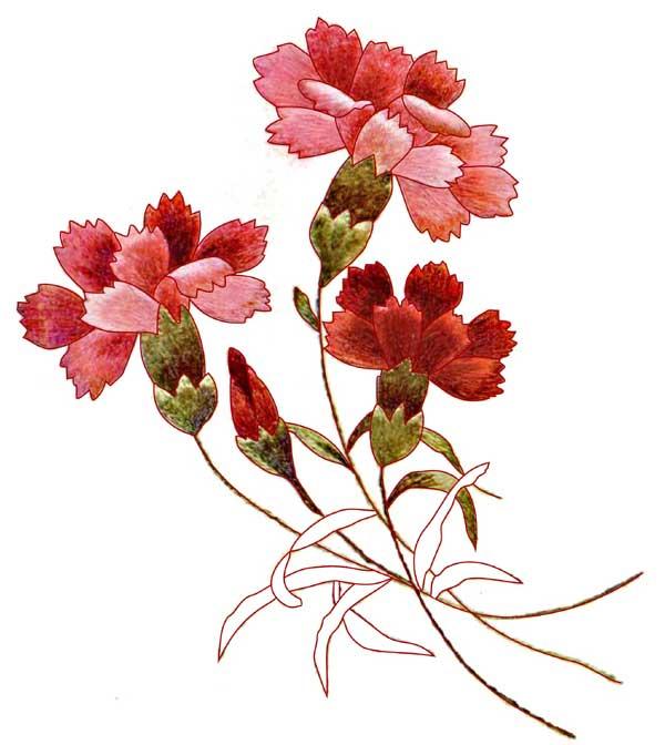 Carnations_Color (600x672, 41Kb)