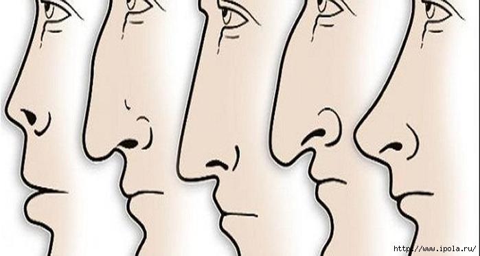"alt=""О чём говорит форма твоего носа?""/2835299__3_ (700x373, 93Kb)"