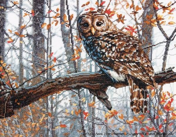 Wise Owl (598x466, 315Kb)