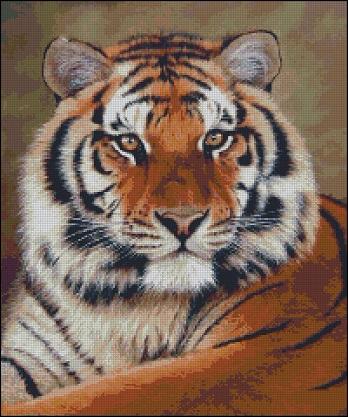 Красавец Тигр_А (348x417, 215Kb)