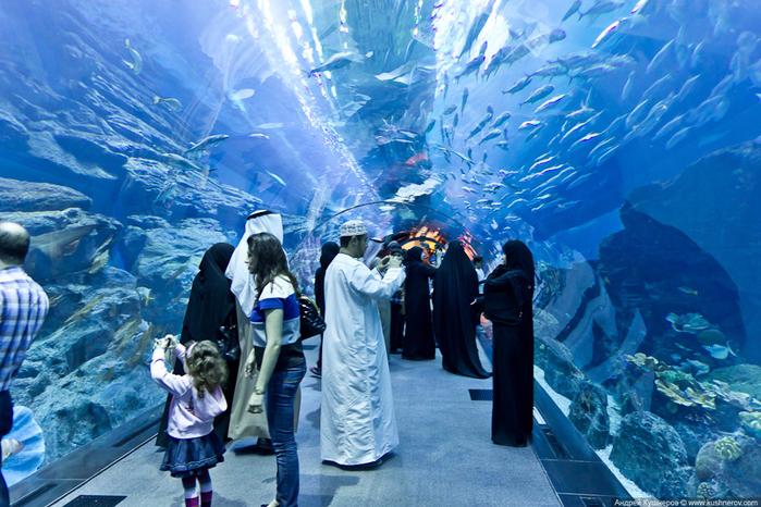 dubai_aquarium11 (700x466, 505Kb)