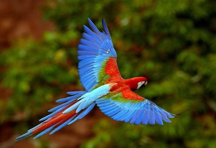 Вы не поверите! 25 интересных фактов о попугаях