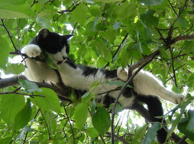 Кошка на дереве2 (640x476, 259Kb)