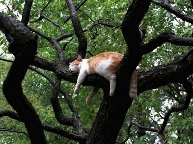 Кошка на дереве3 (640x476, 222Kb)