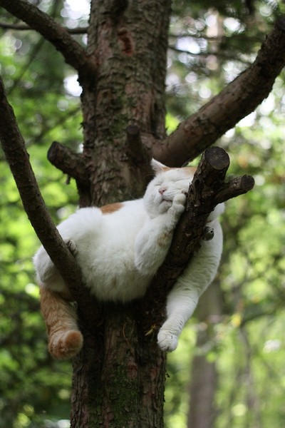Кошка на дереве4 (400x600, 141Kb)