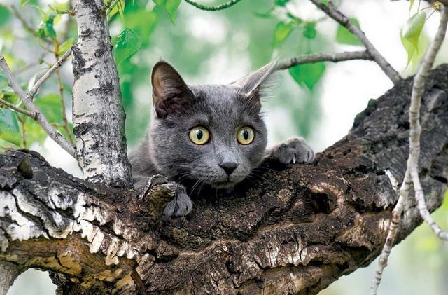 Кошка на дереве20 (640x421, 226Kb)