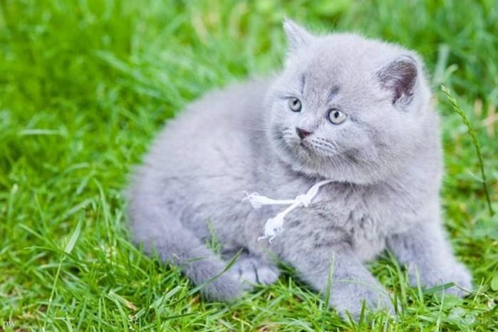 Как отличить кота от кошки по мордочке и другим внешним признакам?