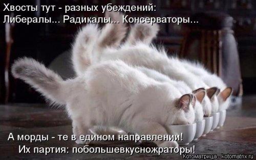 1492793693_kotomatrica-5 (500x312, 127Kb)