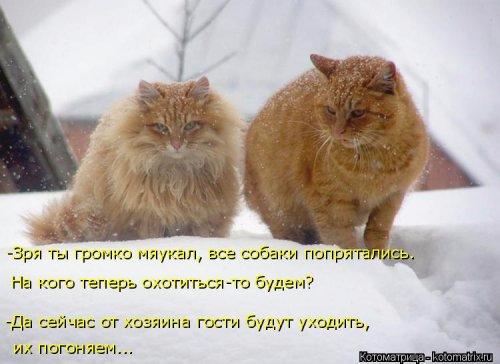 1492793714_kotomatrica-16 (500x364, 151Kb)