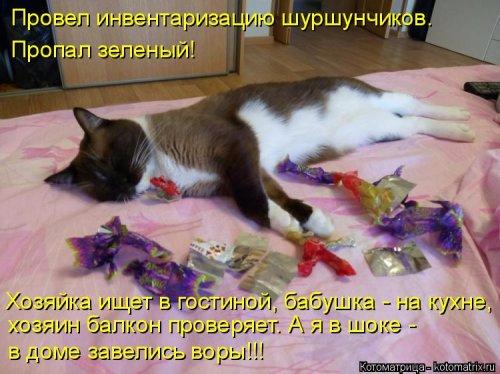 1492793747_kotomatrica-18 (500x374, 211Kb)