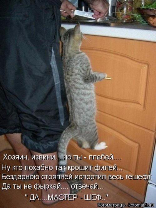 1492793751_kotomatrica-20 (500x666, 257Kb)
