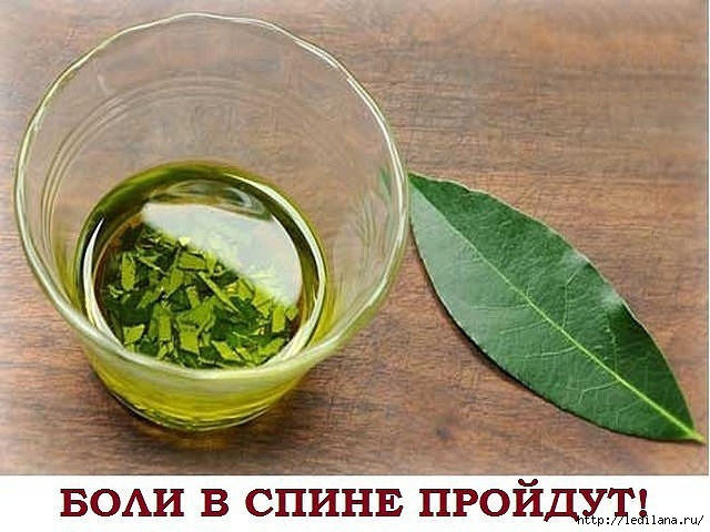 3925311_lavrovii_list_maz (640x480, 199Kb)