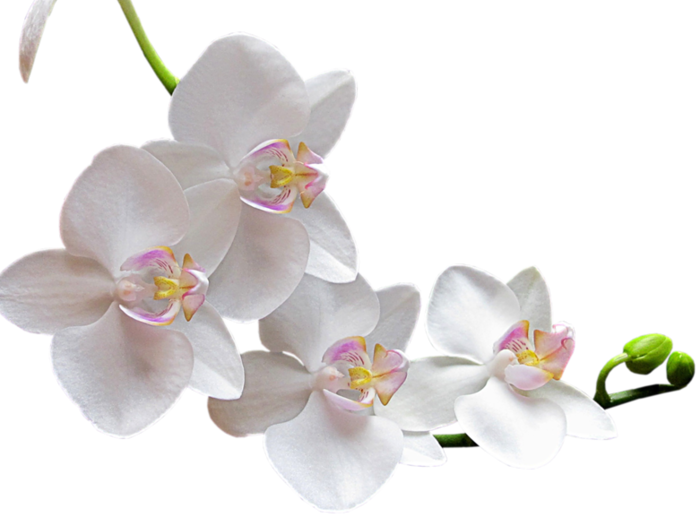 орхид (700x517, 293Kb)