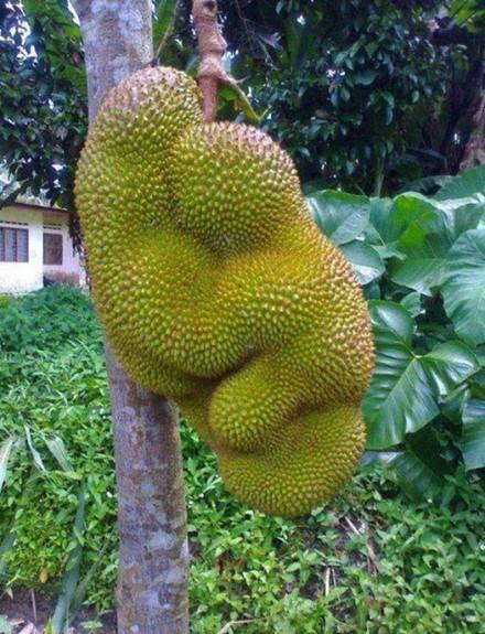Природа любит пошутить! Самые смешные овощи и фрукты   фотографии