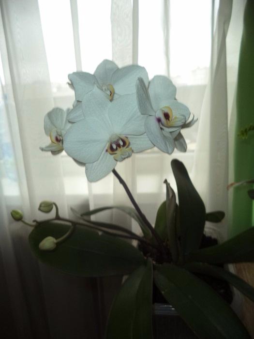 цветочек (525x700, 181Kb)