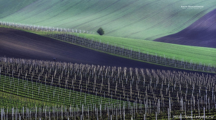 South-Moravian-Region-26-4 (700x390, 292Kb)