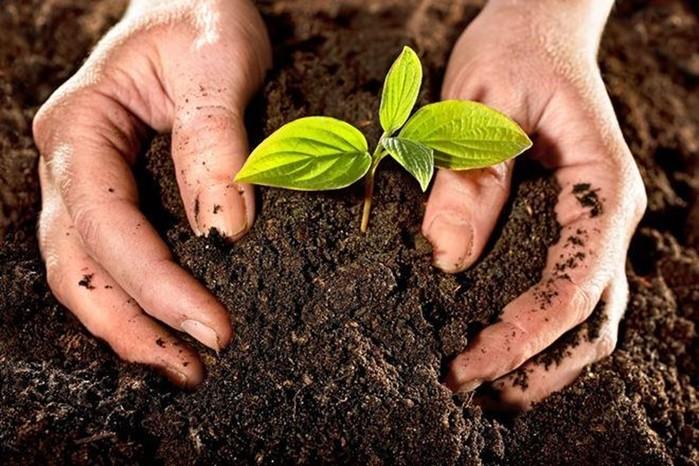 Что такое почва и как она образовалась?