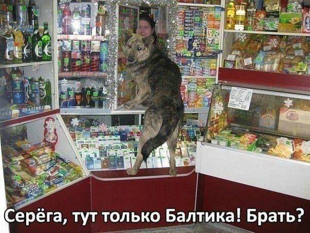 3509984_1360619643_kartinki_prikolnii_hlamur_9 (616x462, 74Kb)