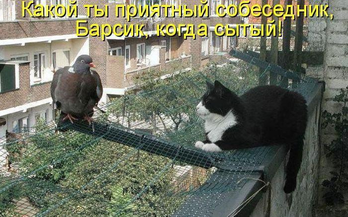 dlyakota.ru_fotoprikoly-s-kotami_kote-kak-est-kote_17 (700x437, 90Kb)