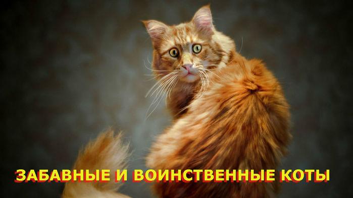 забавные коты (700x393, 46Kb)