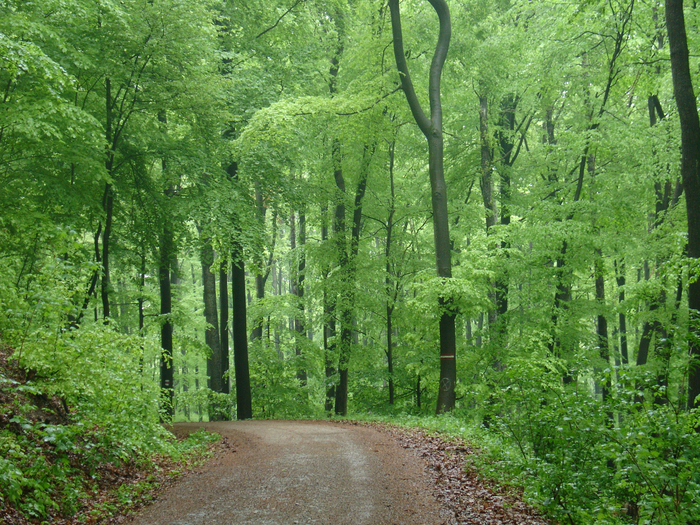 ввенский лес (700x525, 652Kb)