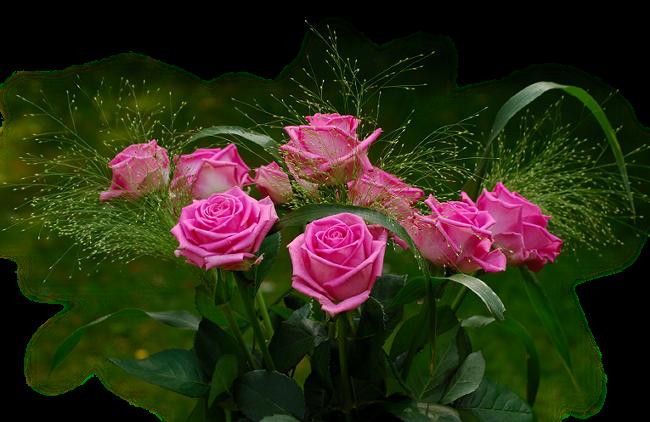 CocoChanel-flower_Biljke_full_2430_141144 (1) (650x422, 494Kb)