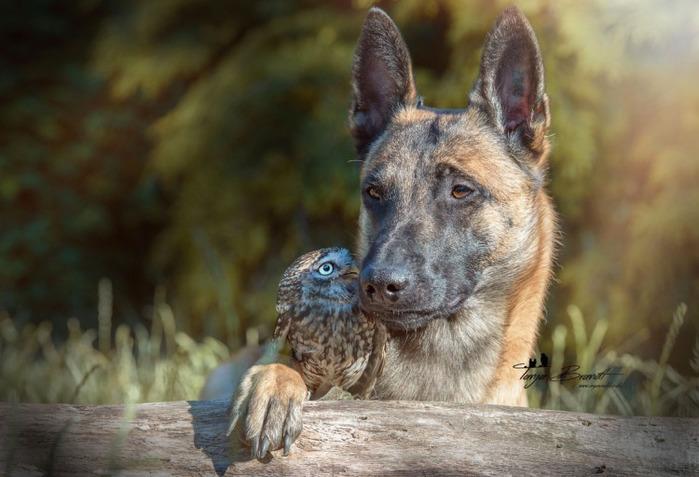 Необычная дружба собаки и совы