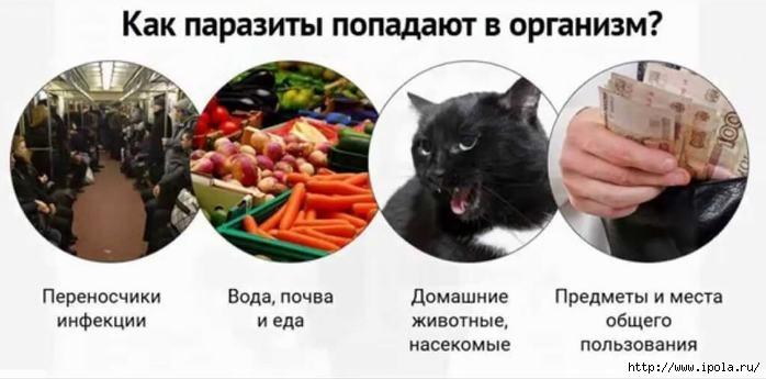 """alt=""""Симптомы наличия паразитов в волосах человека""""/2835299_popadanie_parizitov_v_nash_organizm (700x345, 104Kb)"""