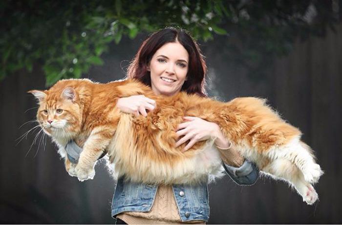 кот омар самый длинный кот в мире 2 (700x460, 255Kb)