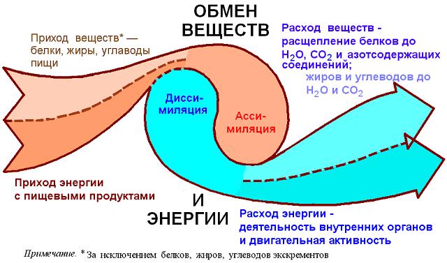"alt=""Что нужно знать про обмен веществ?""/2835299_Chto_nyjno_znat_pro_obmen_veshestv (640x377, 29Kb)"